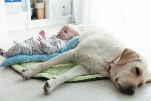 Eine Familie gründen; Wie man ein Haustier an ein neugeborenes Baby gewöhnt. 2