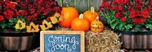 Der Herbst kann kommen: Tolle Ideen um Schwangerschaft oder Geschlecht preiszugeben