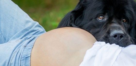 Haustiere und Schwangerschaft: Was Sie beachten sollten