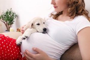 So bereiten Sie Ihren Hund auf ein neues Baby vor 1