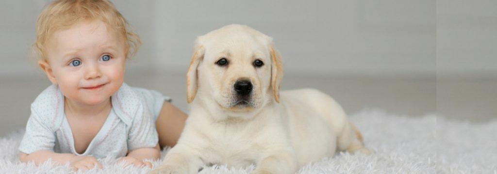 So bereiten Sie Ihren Hund auf ein neues Baby vor